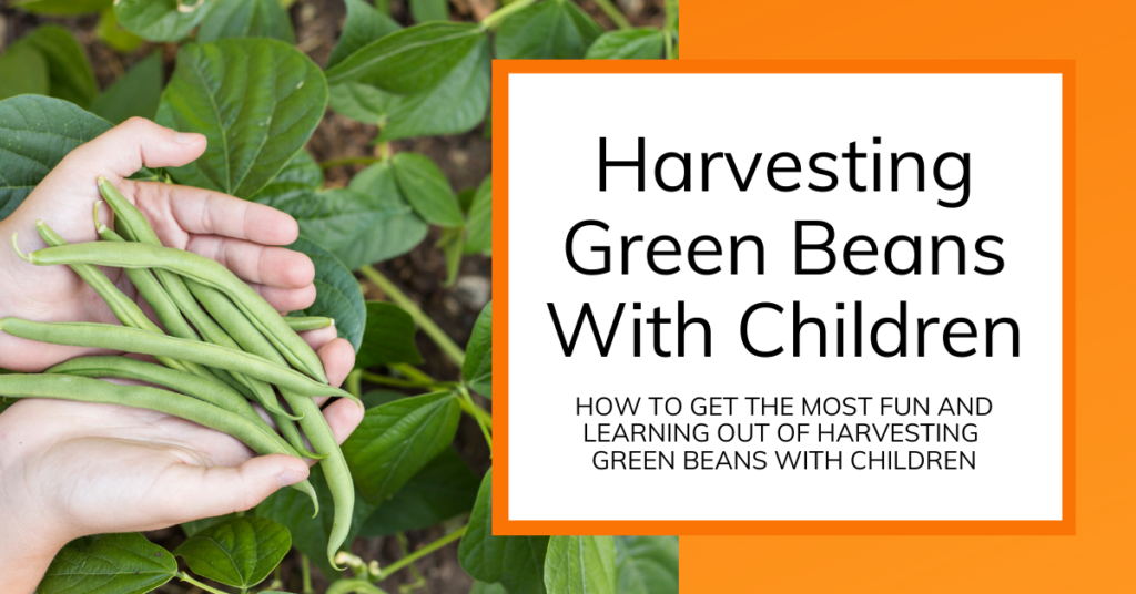cover image for article about picking green beans with kids