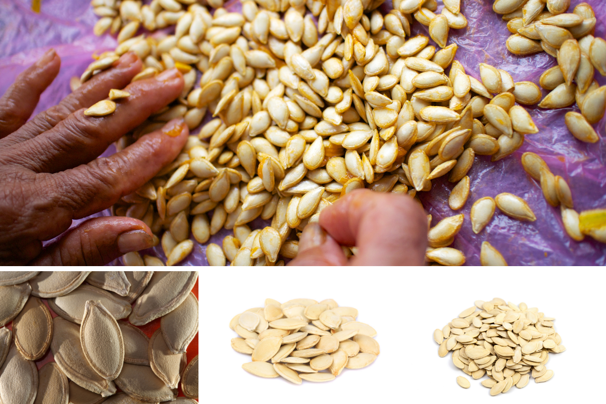 grid of images showing someone sorting pumpkin seeds into three sizes