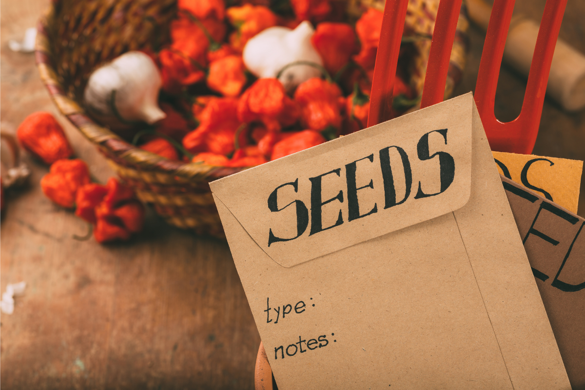 image of a homemade seed packet