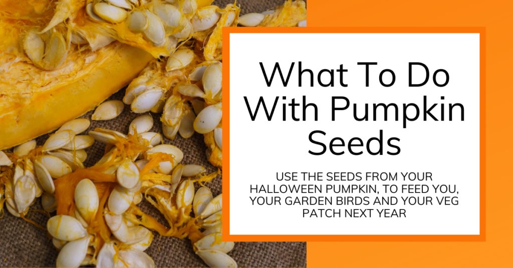 cover image for article on how to use pumpkin seeds