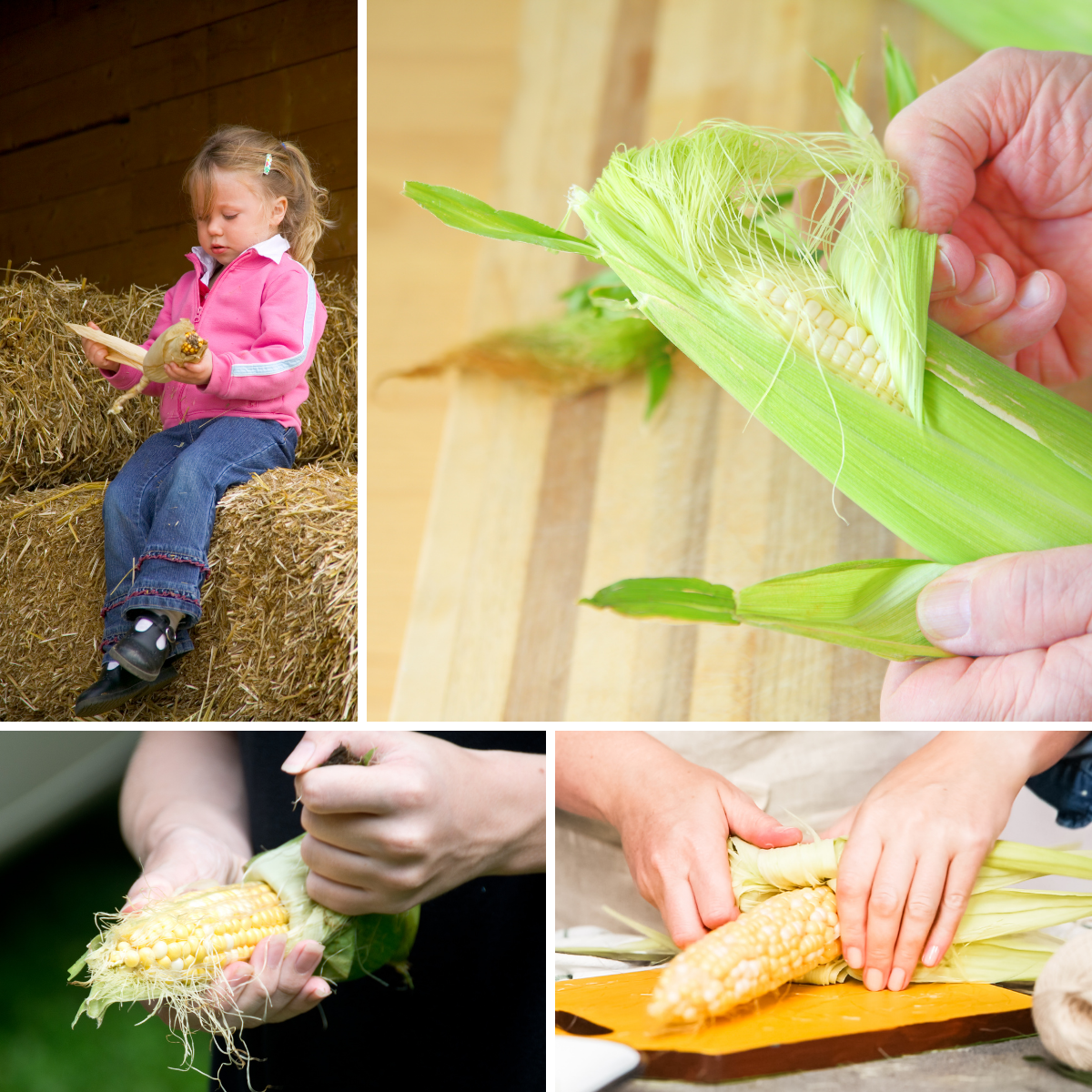 grid of four images showing stages of shucking corn